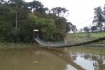 Pica Pau3