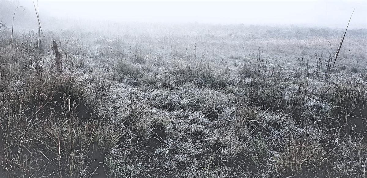 Geada e Congelamento em São Joaquim (7)