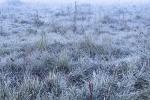 Geada e Congelamento em São Joaquim (9)